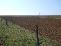 Agroforesterie en zone de plaine